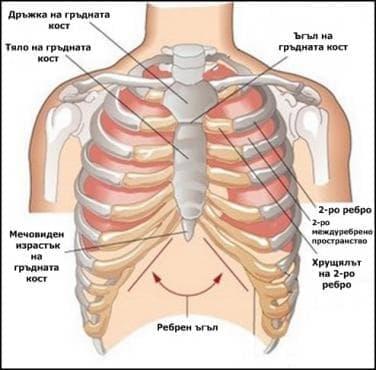 Гръдна клетка (Cavum thoracis) - изображение