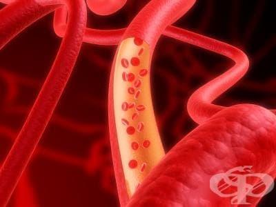 Хистологично устройство на кръвоносните съдове - изображение