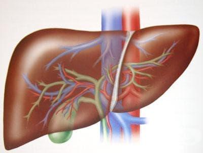 Хистологично устройство на черния дроб - изображение