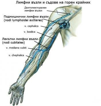 Лимфни възли и съдове на горния крайник - изображение