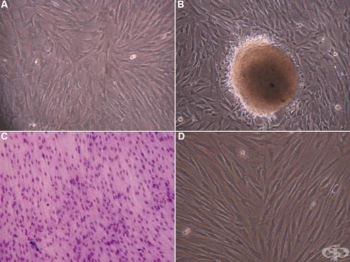 Външна морфология на клетката - изображение