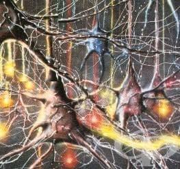 Нервни влакна - изображение