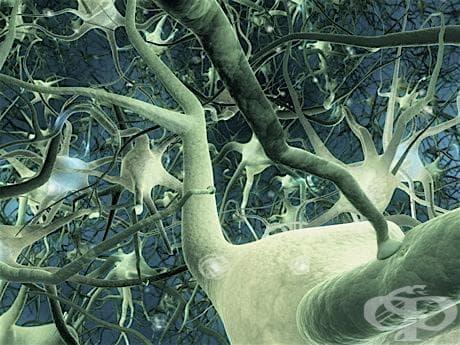 Неврони (Neurones) - изображение