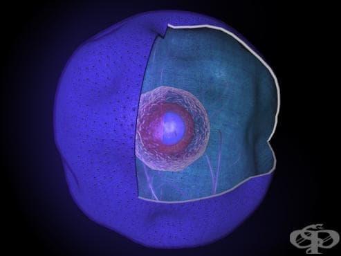 Ядро (Nucleus) - изображение