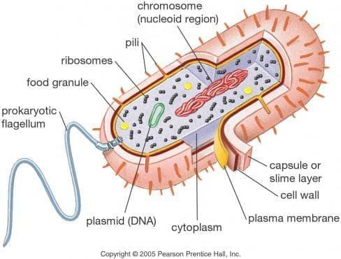 Прокариотни клетки (Prokaryotes) - изображение