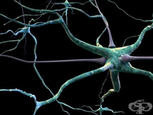 Рецепторни нервни окончания - изображение