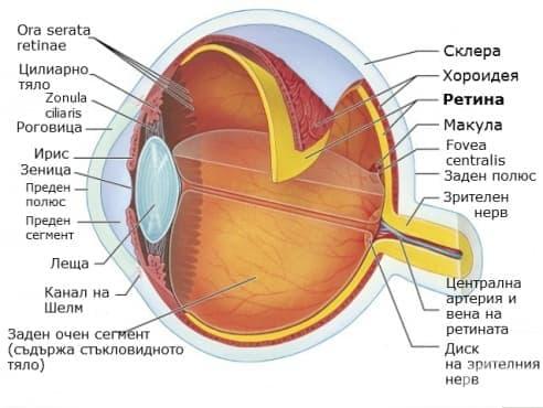 Ретина (retina) - изображение