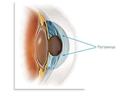 Роговица (cornea) - изображение