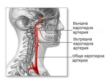 Вътрешна сънна артерия (arteria carotis interna) - изображение