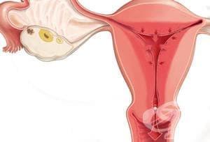 Противовъзпалителни продукти за вагинално приложение (Antiinflammatory products for vaginal administration) | ATC G02CC - изображение