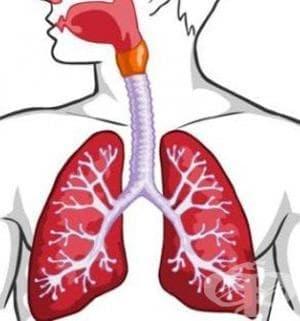 ЛЕКАРСТВА ЗА ЛЕЧЕНИЕ НА ОБСТРУКТИВНИ ЗАБОЛЯВАНИЯ НА ДИХАТЕЛНИТЕ ПЪТИЩА (DRUGS FOR OBSTRUCTIVE AIRWAY DISEASES) | ATC R03 - изображение