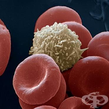 КРЪВНИ ЗАМЕСТИТЕЛИ И РАЗТВОРИ ЗА ПЕРФУЗИЯ (BLOOD SUBSTITUTES AND PERFUSION SOLUTIONS) | ATC B05 - изображение
