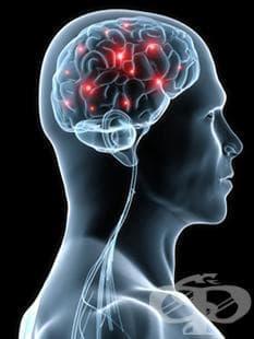 НЕРВНА СИСТЕМА (NERVOUS SYSTEM) | ATC N - изображение