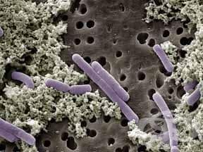 организми, продуциращи млечна киселина, комбинации (lactic acid producing organisms, combinations)   ATC A07FA51 - изображение