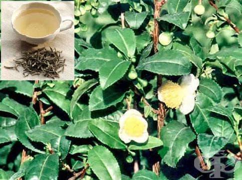 Бял чай - изображение