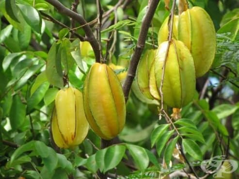Карамбола, звезден плод - изображение