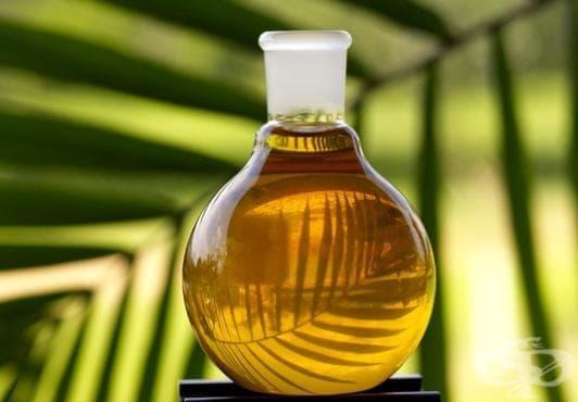 Палмово масло - изображение