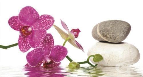 Орхидея - изображение