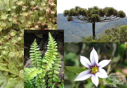 Царство Plantae - изображение
