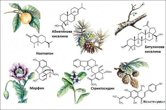 Активни вещества в растенията - изображение