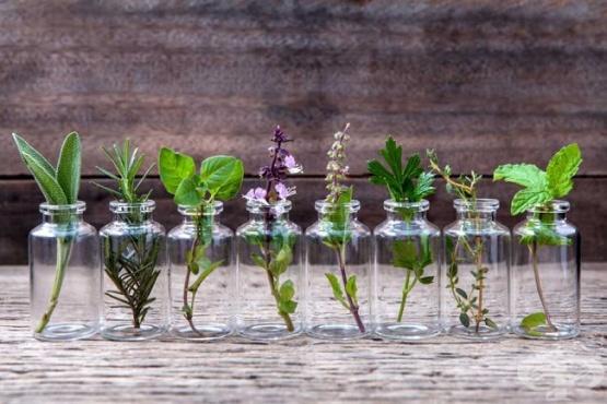 Лечебните билки в България по азбучен ред - изображение