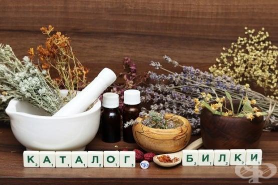 Каталог на билки и лечебни растения - изображение