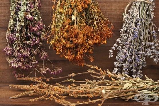 Правила при сушене на билки - изображение