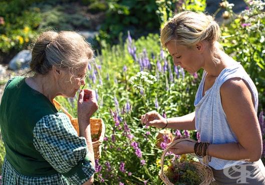 Съвети и правила за събиране на билки - изображение