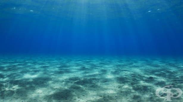 Зоната на смъртта в световния океан се увеличава - изображение