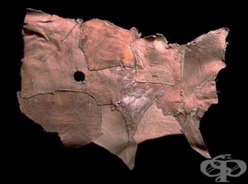 Човешка кожа ще се използва в козметичната хирургия - изображение