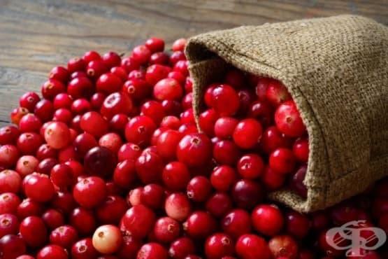 Червената боровинка е изключително средство срещу пикочни инфекции - изображение
