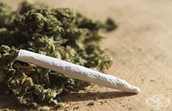 Марихуаната като метод за отказване от твърди наркотици - изображение