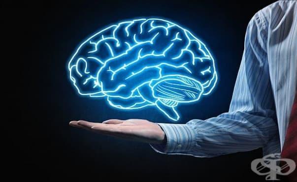 Мозъкът има способността да предвижда думи преди да бъдат произнесени - изображение