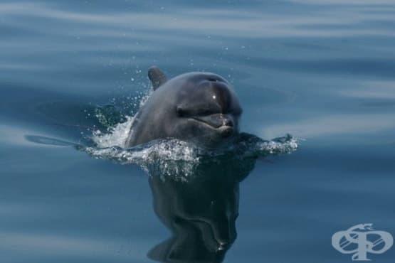 Високи нива на живак и замърсители са открити в делфините, обитаващи Ламанша - изображение