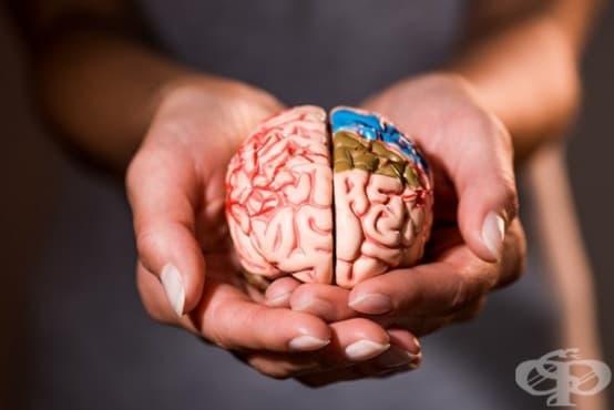 Според проучване високомазнинната диета по време на бременност вреди на мозъчното развитие на плода - изображение