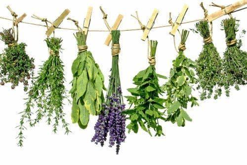 8 билки и подправки, които са безценни за здравето ни - изображение