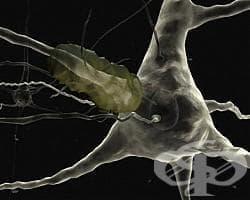 Мозъкът ни се управлява от осем центъра - изображение