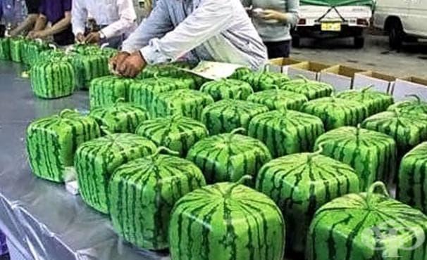 Най-предпочитаният подарък в Япония е квадратната диня - изображение