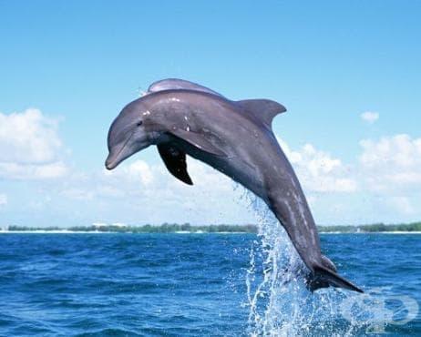 38 мъртви делфина са открити от началото на 2013 г. - изображение