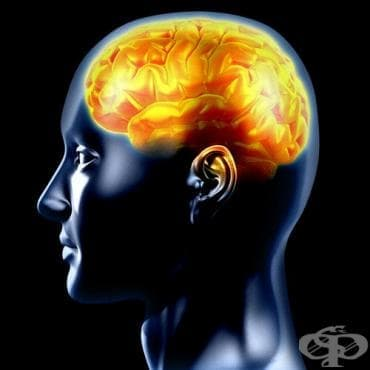 Работи ли мозъкът след правата линия? - изображение