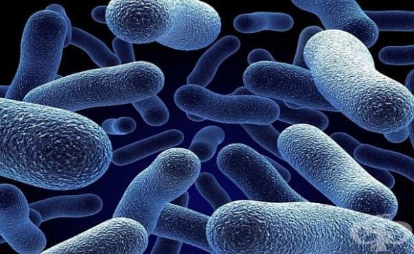 Намериха начин как да унищожават вредни бактерии със светлина - изображение