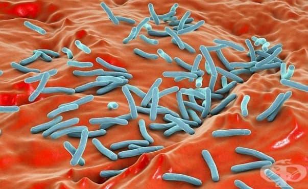 Декодираха геномите на близо 3000 опасни бактерии - изображение