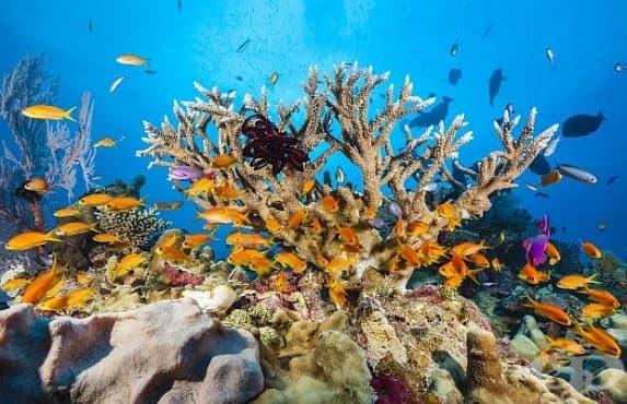 Големият бариерен риф е оценен на 42 милиарда долара - изображение