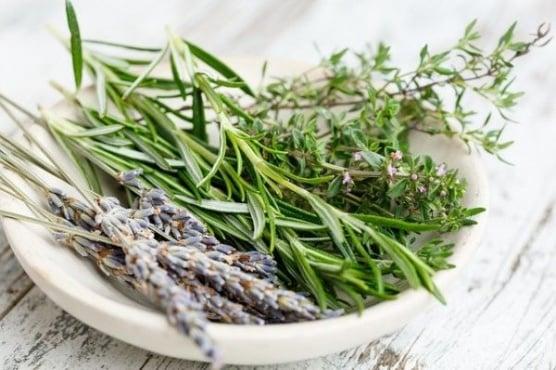 Осем билки за по-здрави кости - изображение