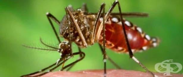 Ново генетично оръжие ще се бори с комарите - изображение