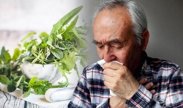 Босилекът помага при кашлица - изображение