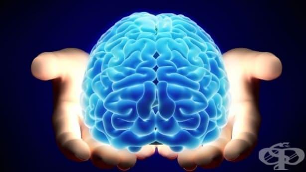 Според някои учени плодовете са причина мозъкът ни да е голям  - изображение