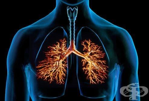 Изчистват ли се белите дробове след спиране на цигарите - изображение