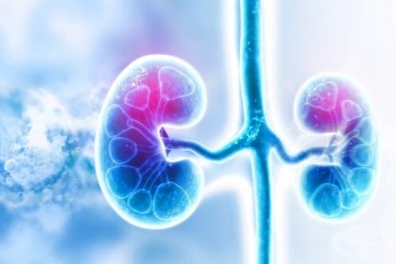 Според проучване хроничното бъбречно заболяване е свързано с повишен сърдечносъдов риск - изображение