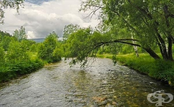 Хигиената и здравето се подобряват, ако има повече дървета край водоизточниците - изображение